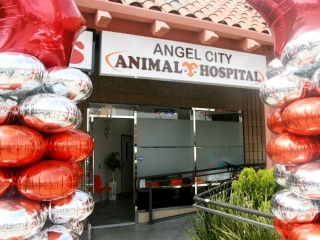 1Angel City_p13